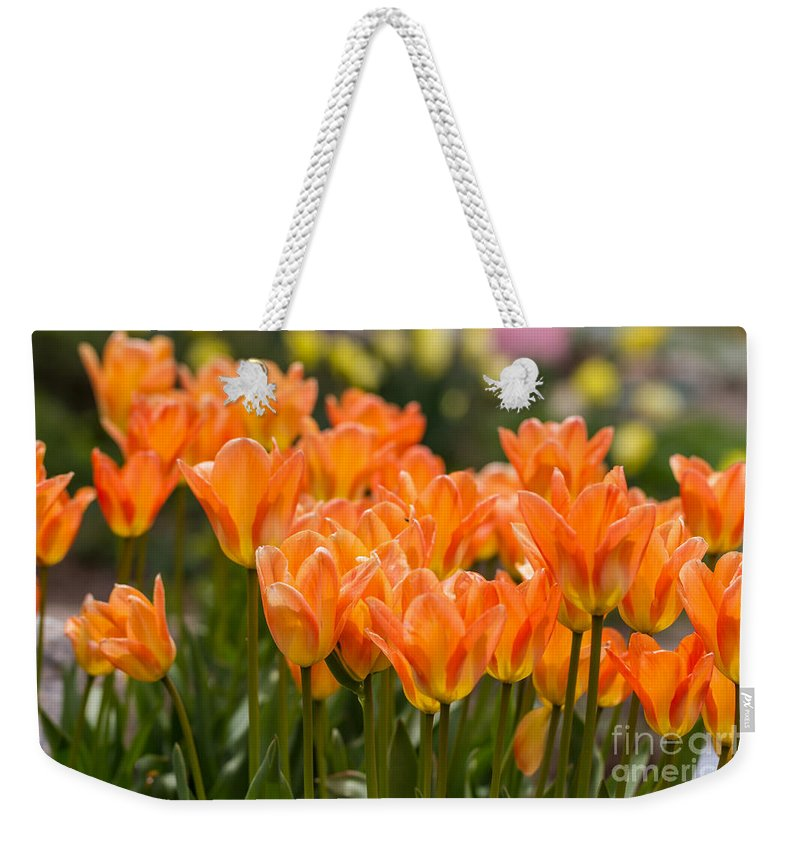 Colorado Weekender Tote Bag featuring the photograph Orange Tulips by Ashley M Conger