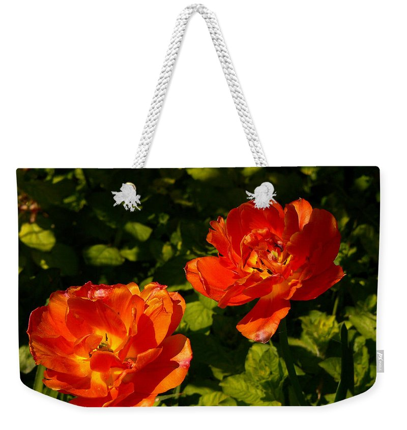 'orange Tulips' Weekender Tote Bag featuring the photograph Orange Tulips In My Garden by Helmut Rottler