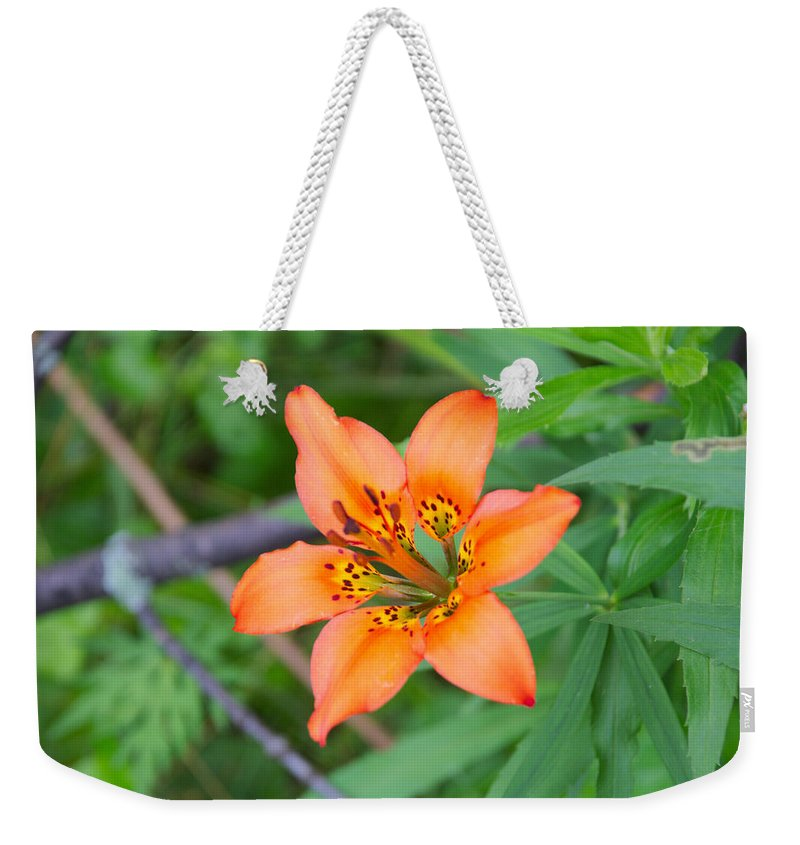Flower Weekender Tote Bag featuring the photograph Orange Wildflower by Timothy Ruf