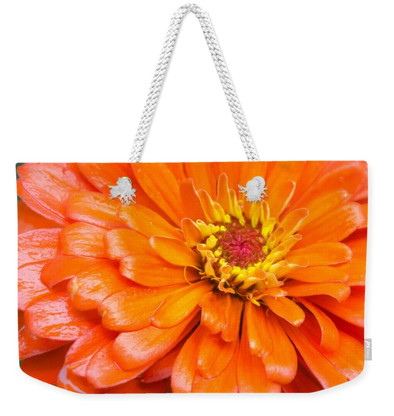 Minnesota Weekender Tote Bag featuring the photograph Orange Zinnia After A Rain by Jim Hughes
