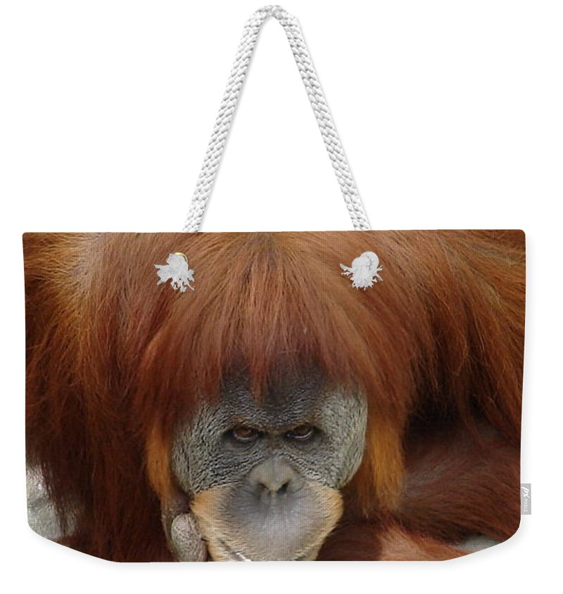 Red Ape Eyes Weekender Tote Bag featuring the photograph Orangutan by Luciana Seymour