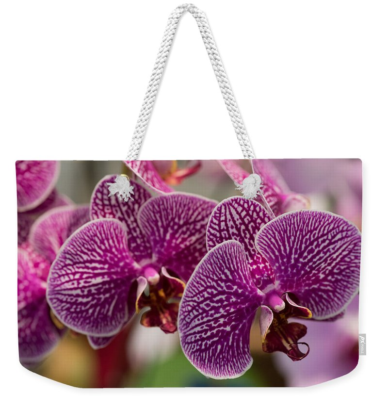 2016 Orchid Society Show Weekender Tote Bag featuring the photograph Orchid Ascda Laksi by JG Thompson
