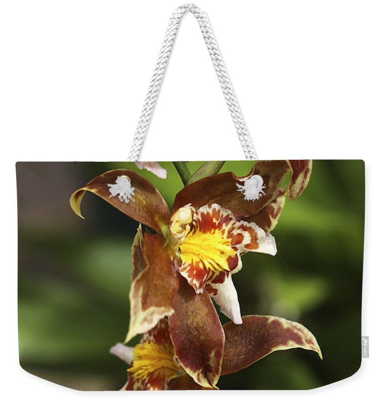 Orchids Weekender Tote Bag featuring the photograph Orchid Curve by Deborah Benoit