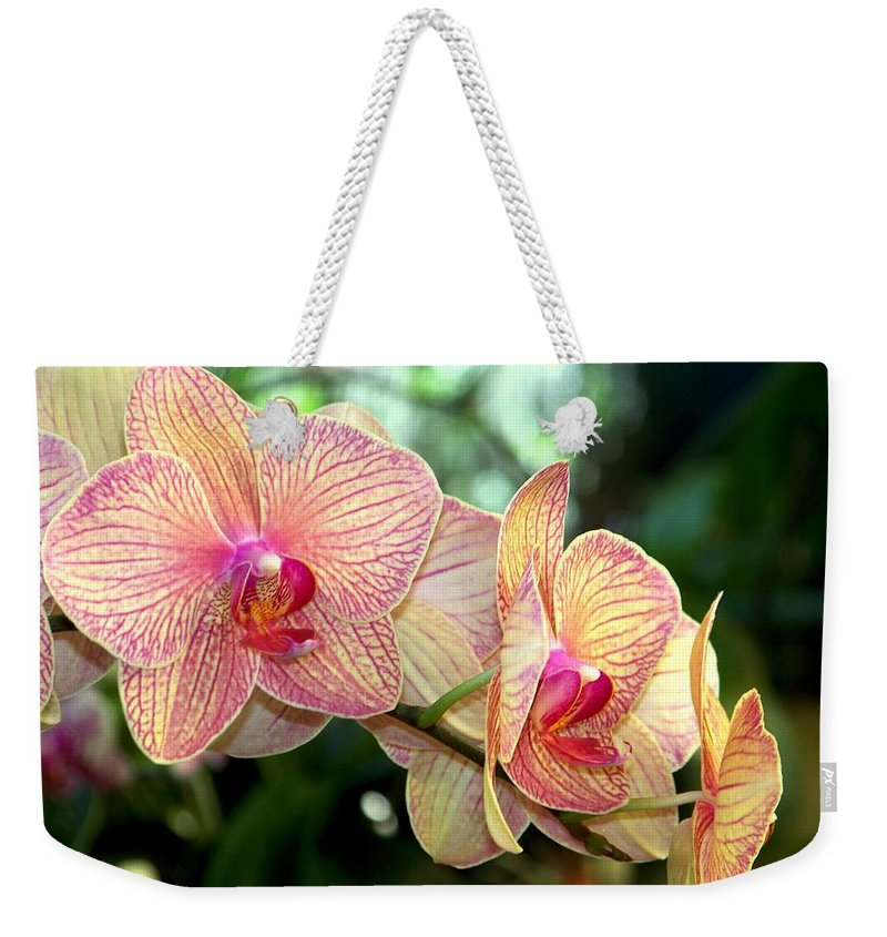 Orchid Weekender Tote Bag featuring the photograph Orchid Delight by Karen Wiles