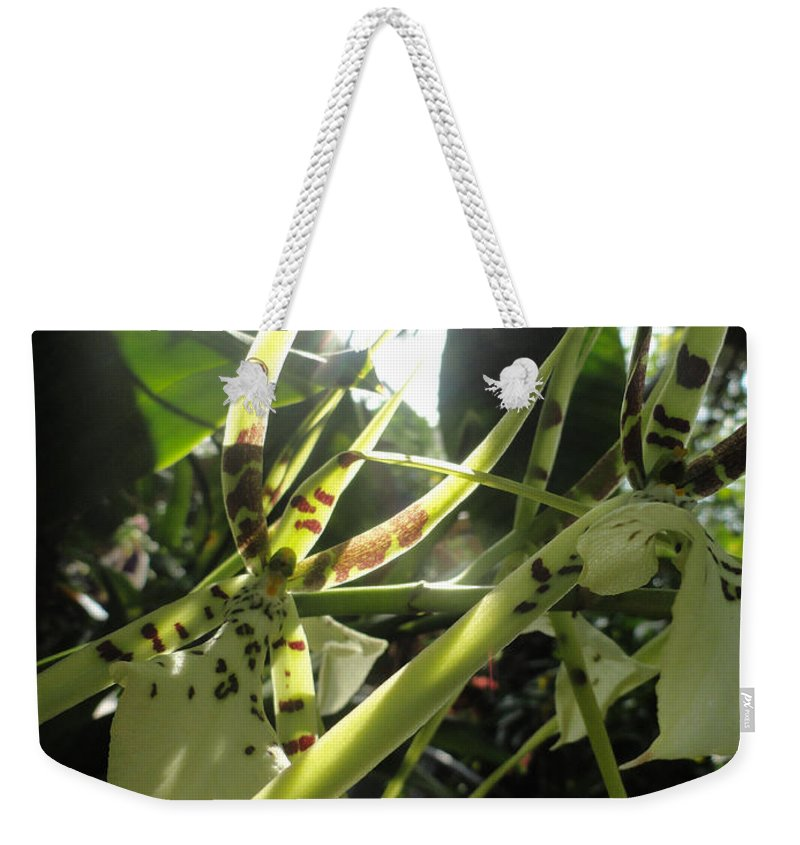 Orchid Weekender Tote Bag featuring the photograph Orchid Light by Trish Hale