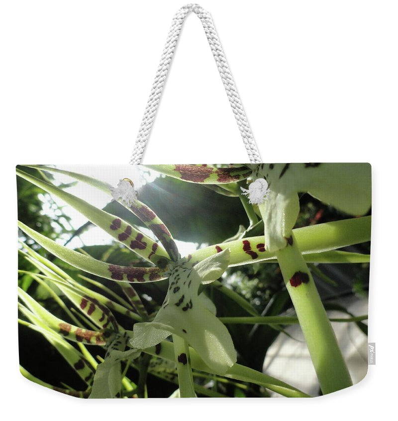 Orchid Weekender Tote Bag featuring the photograph Orchid Lumin by Trish Hale