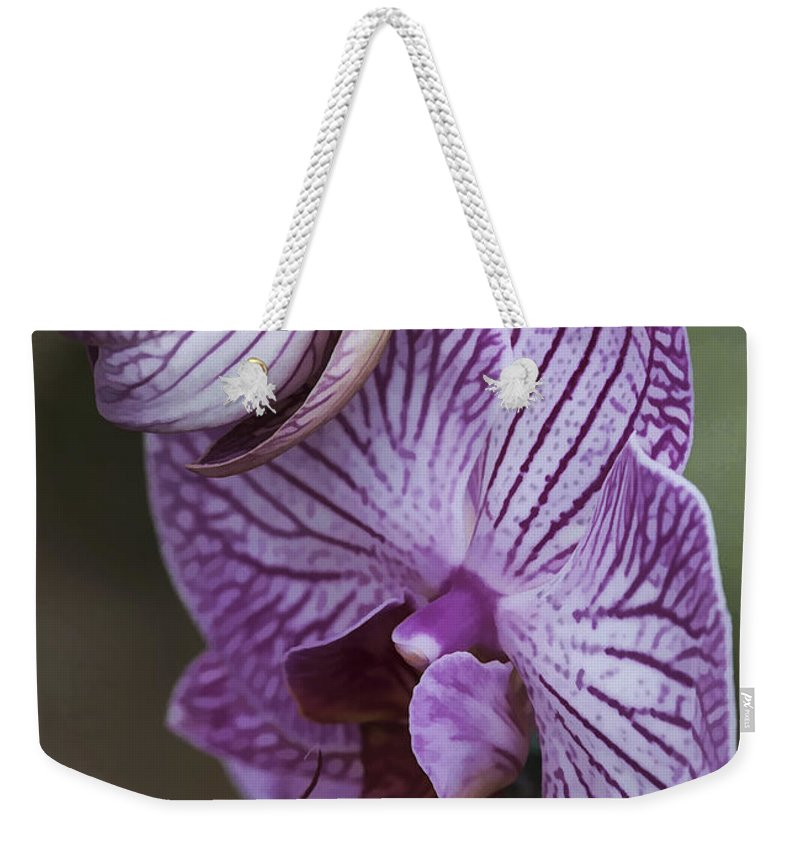 Flower Weekender Tote Bag featuring the photograph Orchid Strips by Deborah Benoit