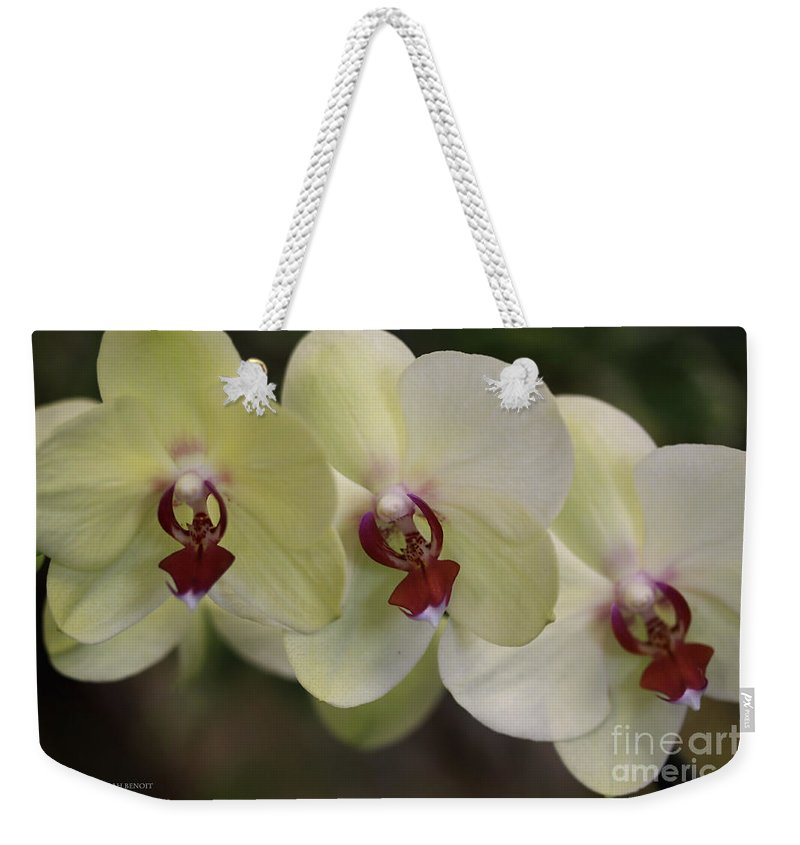 Orchids Weekender Tote Bag featuring the photograph Orchid White Trio by Deborah Benoit