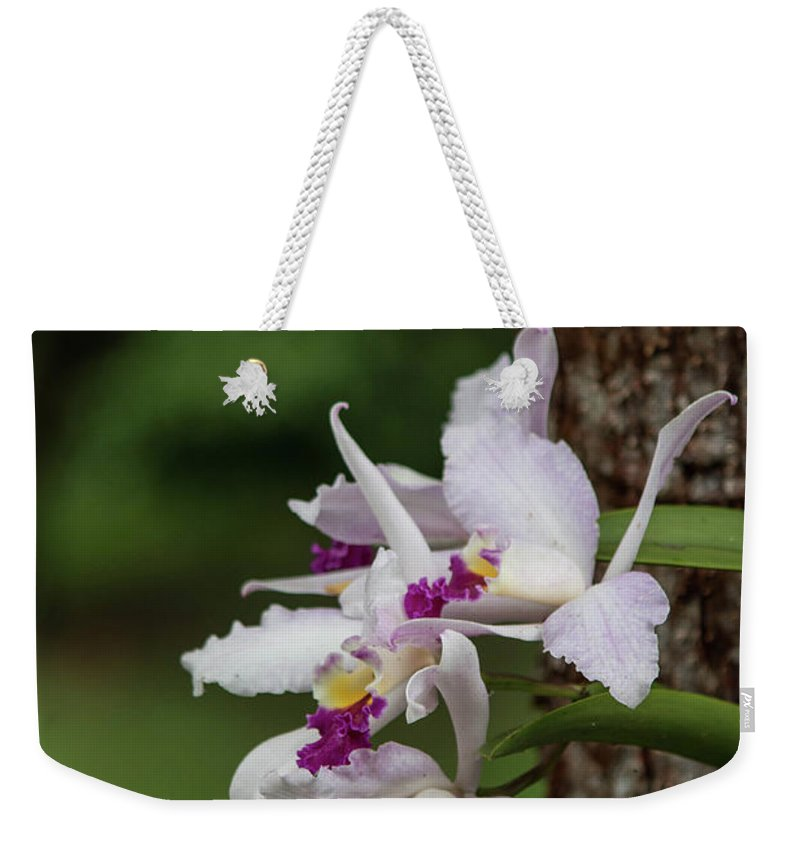 Orchid Weekender Tote Bag featuring the photograph Orchids On A Tree by Teresa Wilson