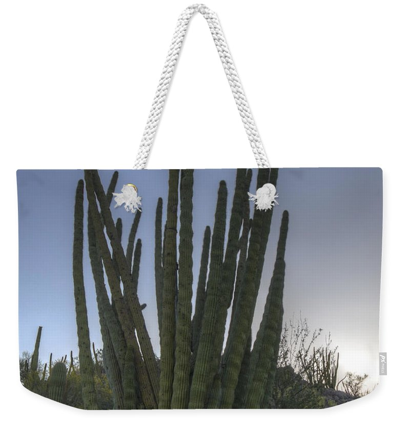 Jean Noren Weekender Tote Bag featuring the photograph Organ Pipe Cactus At Sunset by Jean Noren