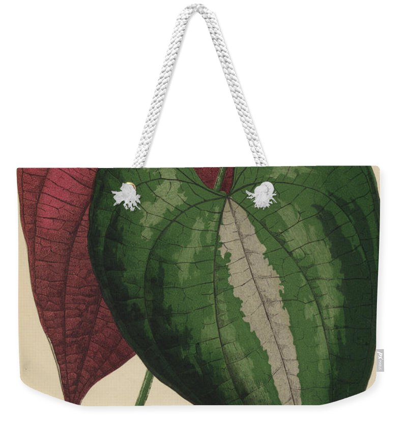 Dioscorea Discolor Weekender Tote Bag featuring the painting Ornamental Yam Dioscorea Discolor by English School