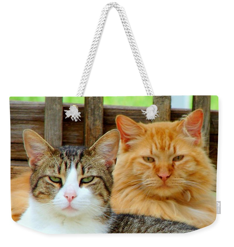 Cats Weekender Tote Bag featuring the photograph Oscar And Red by J R Seymour