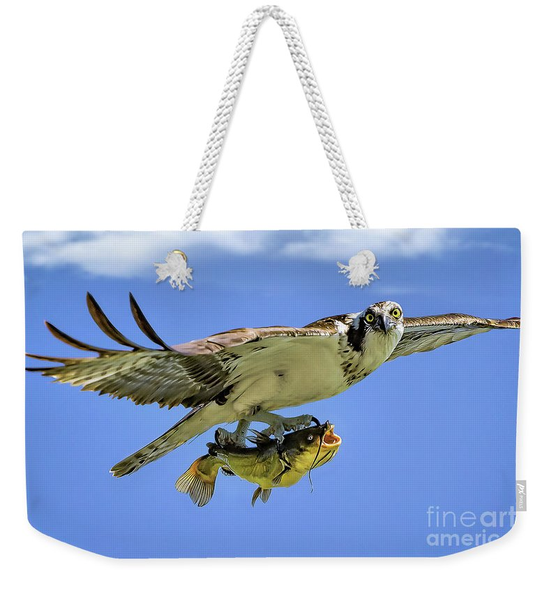 Osprey Weekender Tote Bag featuring the photograph Osprey And Catfish by Monica Hall