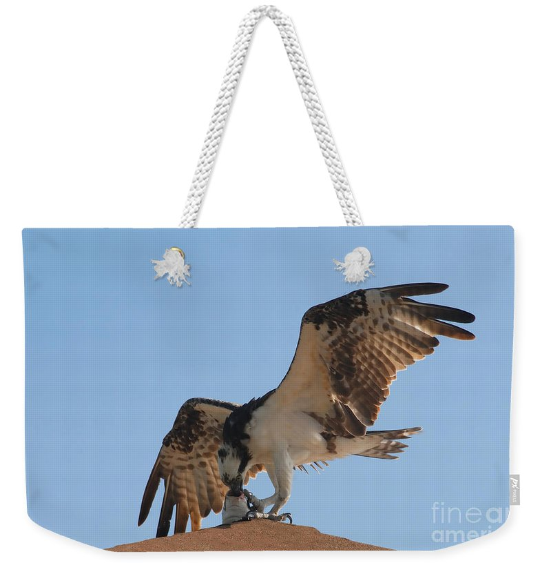 Osprey Weekender Tote Bag featuring the photograph Osprey by David Lee Thompson