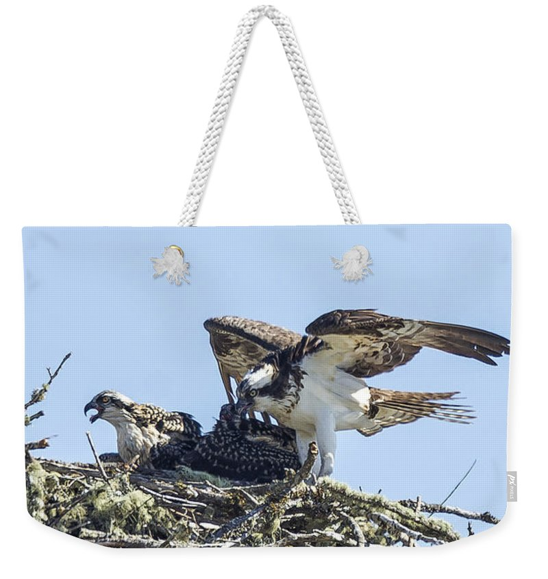 Osprey Weekender Tote Bag featuring the photograph Osprey Family Portrait No. 1 by Belinda Greb