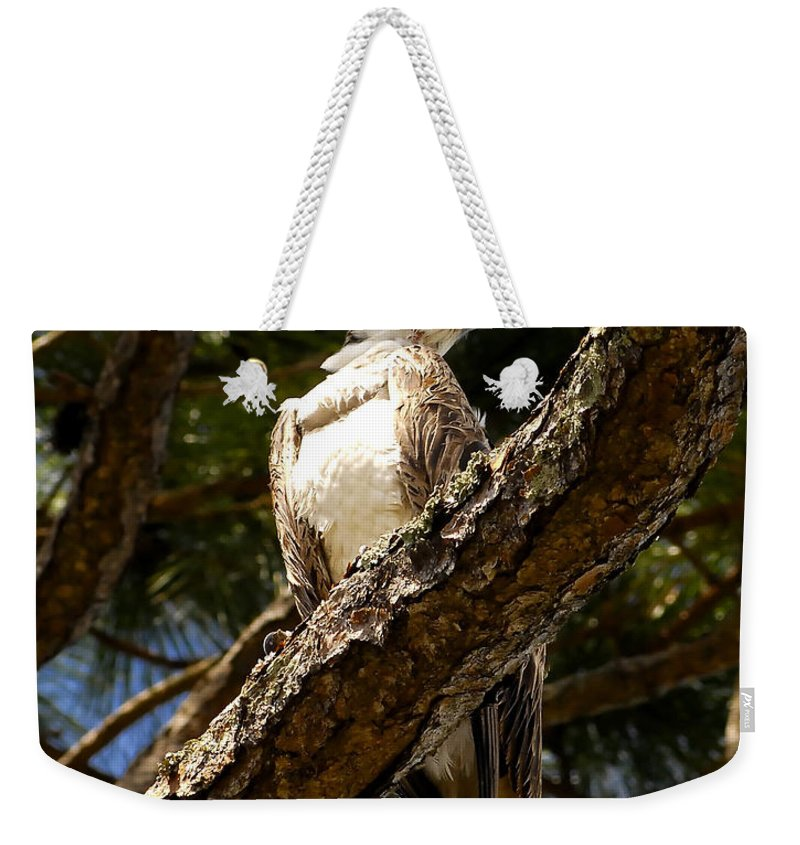 Osprey Weekender Tote Bag featuring the photograph Osprey Hunting by David Lee Thompson