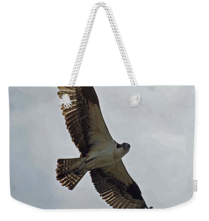 Birds Weekender Tote Bag featuring the photograph Osprey In Flight by Ernie Echols