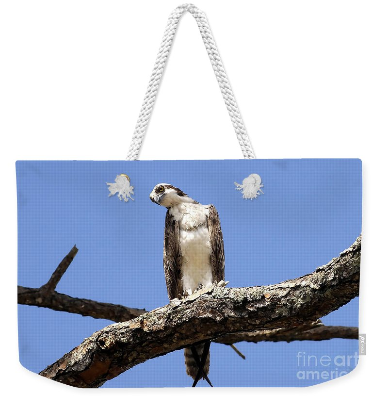 Osprey Weekender Tote Bag featuring the photograph Osprey In The Trees by David Lee Thompson
