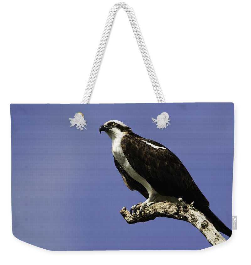 2012 Weekender Tote Bag featuring the photograph Osprey by Marie Elise Mathieu