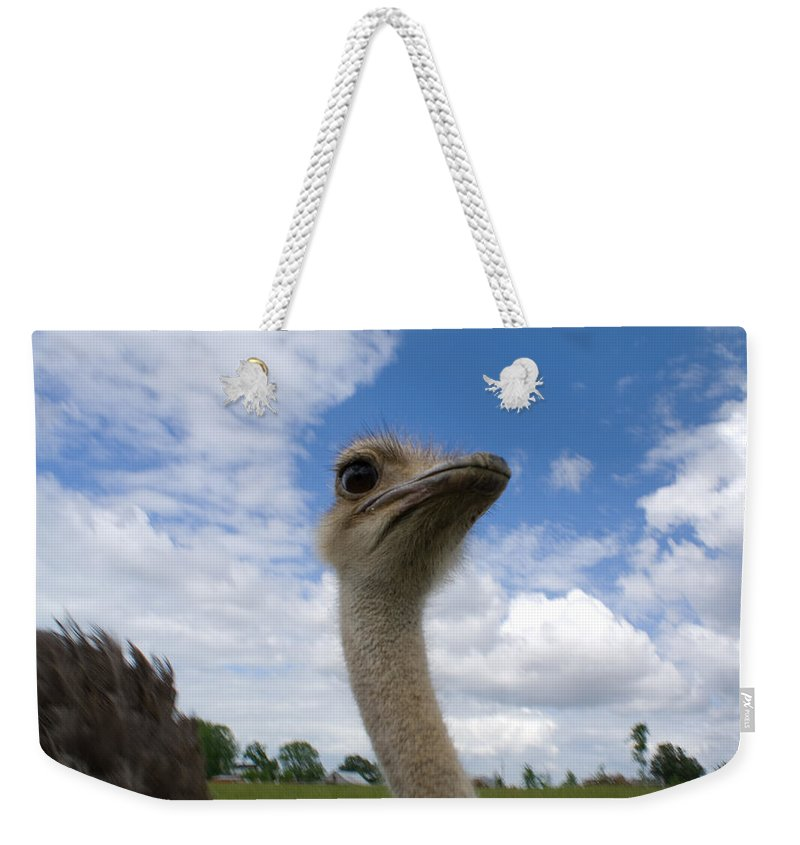 Ostrich Weekender Tote Bag featuring the photograph Ostrich High In The Sky by Douglas Barnett