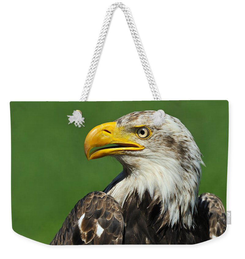 Bald Eagle Weekender Tote Bag featuring the photograph Over The Shoulder by Tony Beck