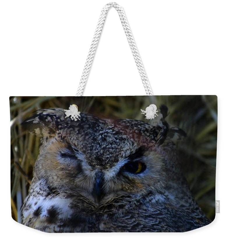 Owl Weekender Tote Bag featuring the photograph Owl by Anthony Jones