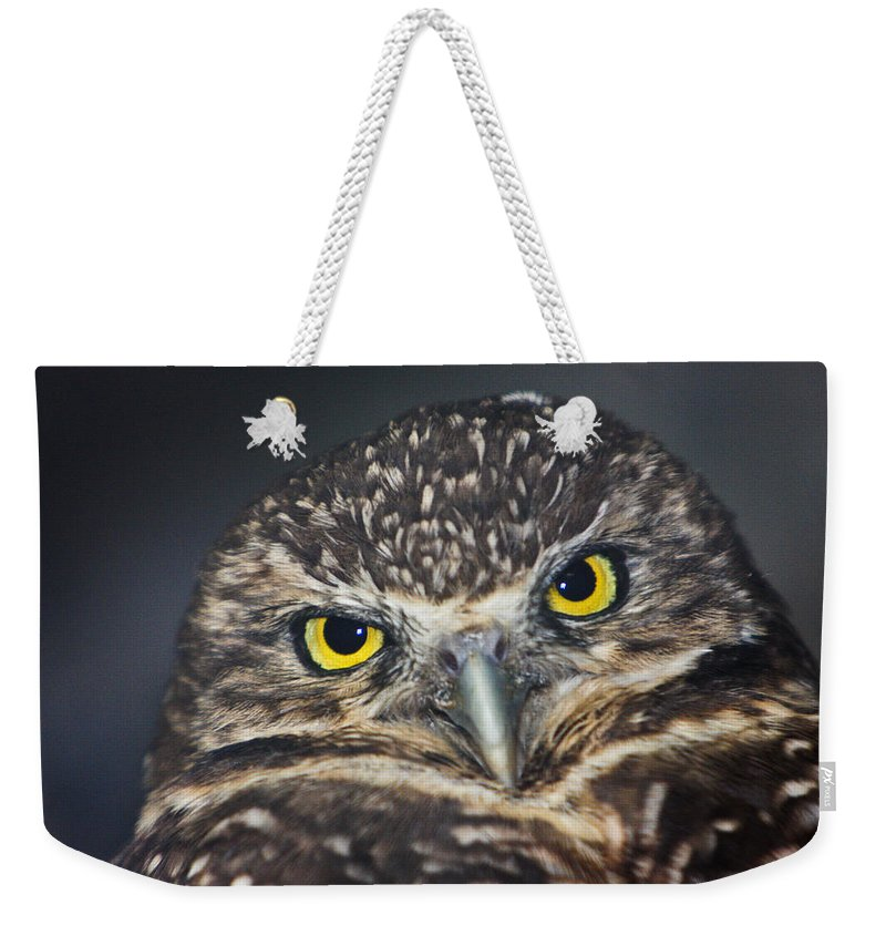 Owl Weekender Tote Bag featuring the photograph Owl Face To Face by Douglas Barnett