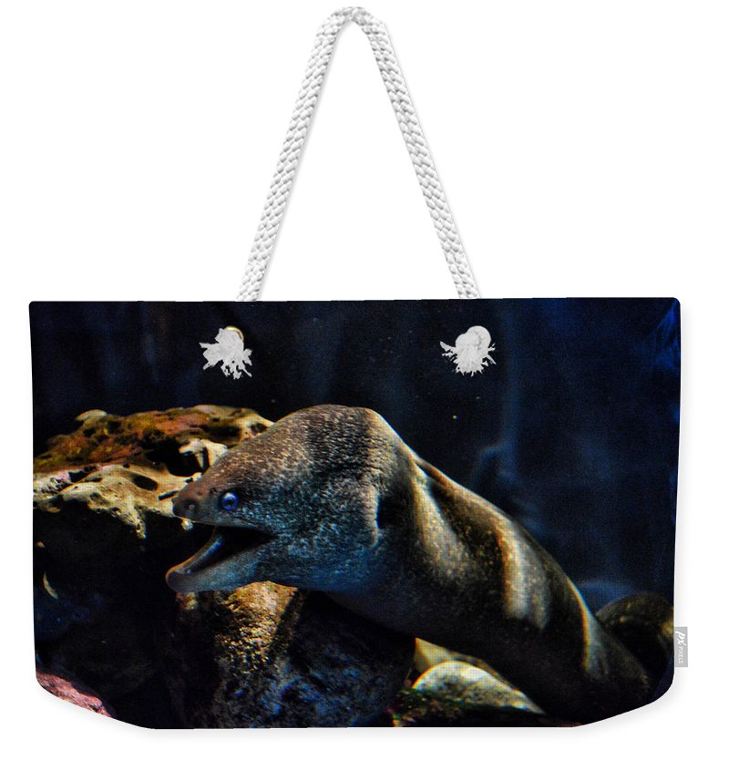 Eel Weekender Tote Bag featuring the photograph Pacific Moray Eel by Tommy Anderson