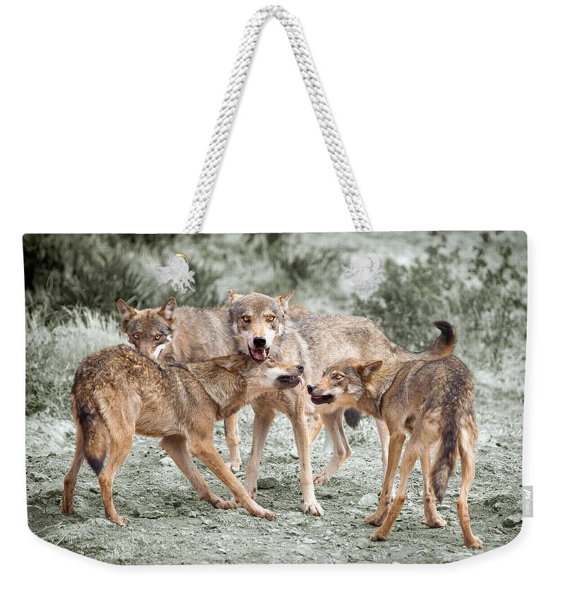 Wolf Weekender Tote Bag featuring the photograph Pack Dispute by Mal Bray