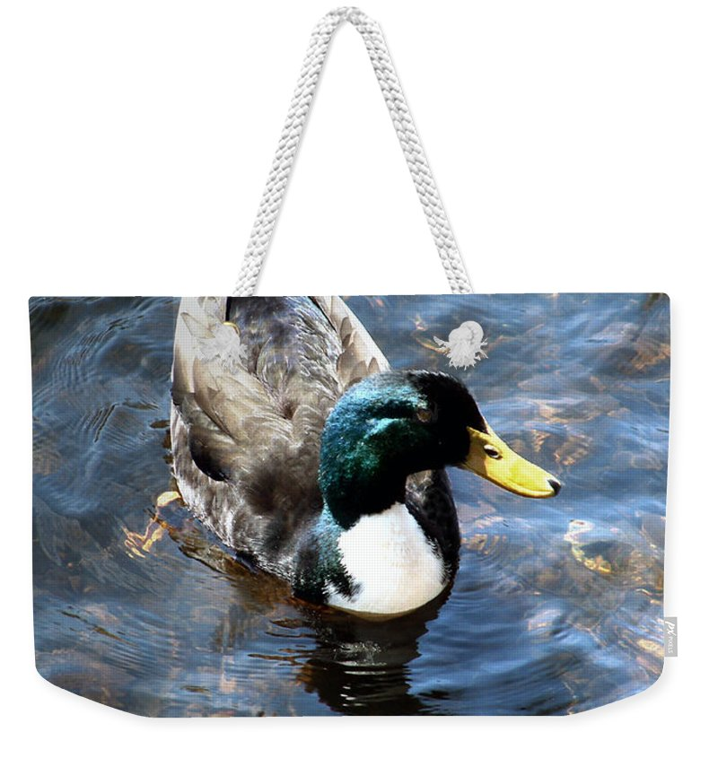 Drake Weekender Tote Bag featuring the photograph Paddling Peacefully by RC DeWinter