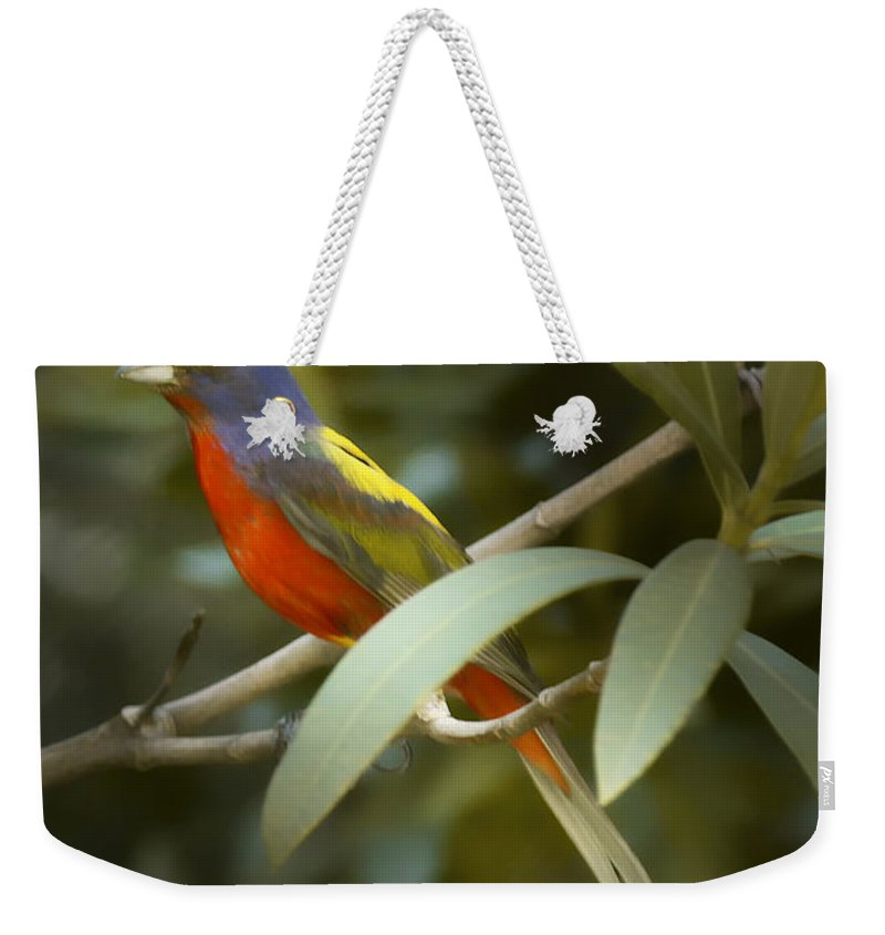 Painted Bunting Weekender Tote Bag featuring the photograph Painted Bunting Male by Phill Doherty