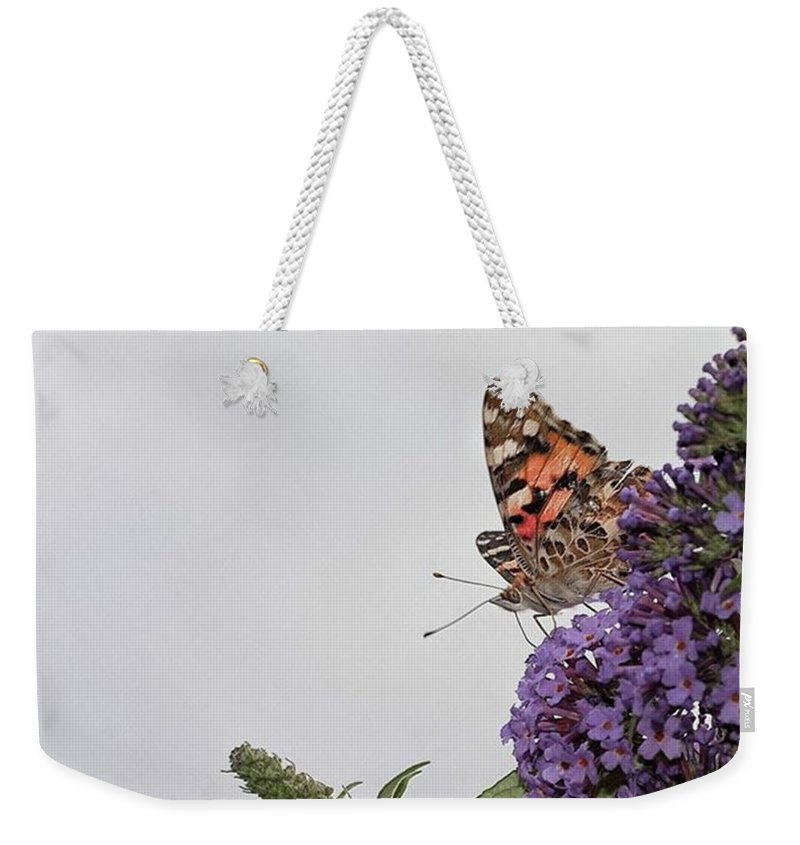 Insectsofinstagram Weekender Tote Bag featuring the photograph Painted Lady (vanessa Cardui) by John Edwards