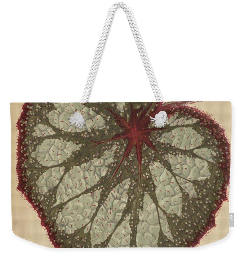 Leaf Weekender Tote Bag featuring the painting Painted Leaf Begonia by English School