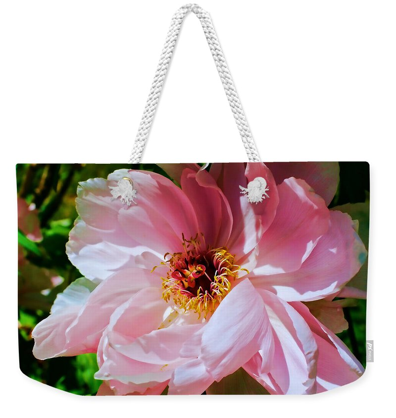 Peony Weekender Tote Bag featuring the photograph Painted Velvet Petals by Mike Smale