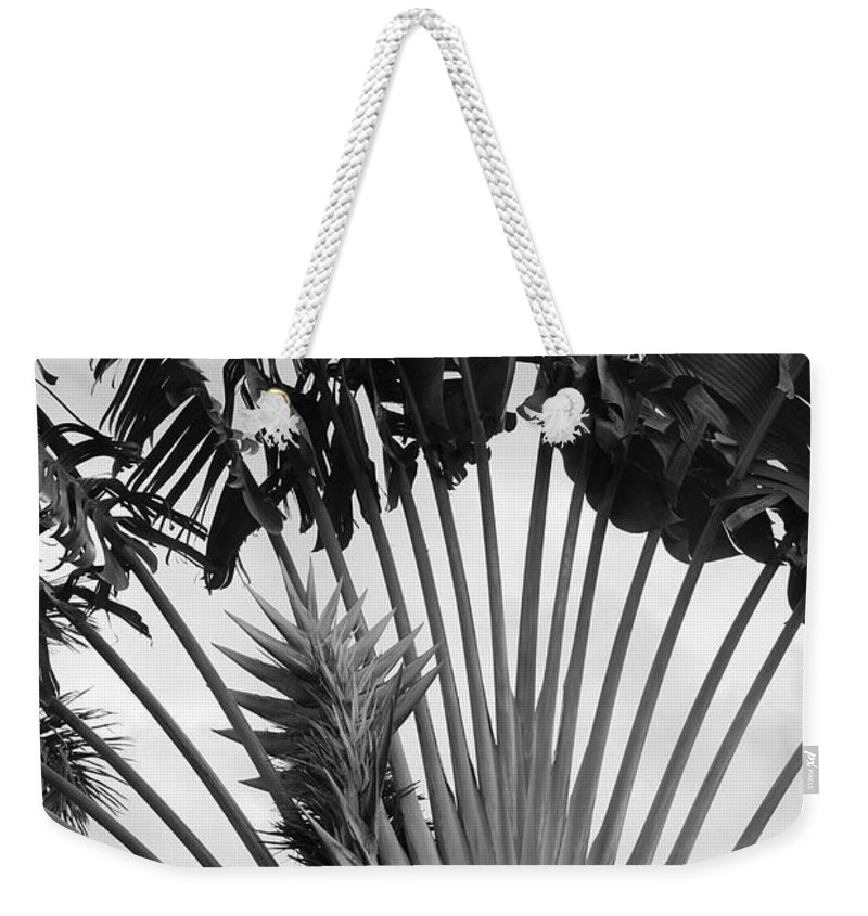 Macro Weekender Tote Bag featuring the photograph Palm Frons by Rob Hans