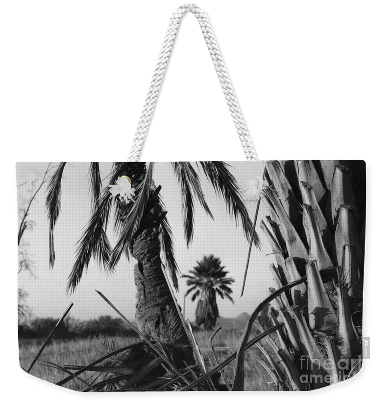 Black And White Photograpy Weekender Tote Bag featuring the photograph Palm In View Bw Horizontal by Heather Kirk