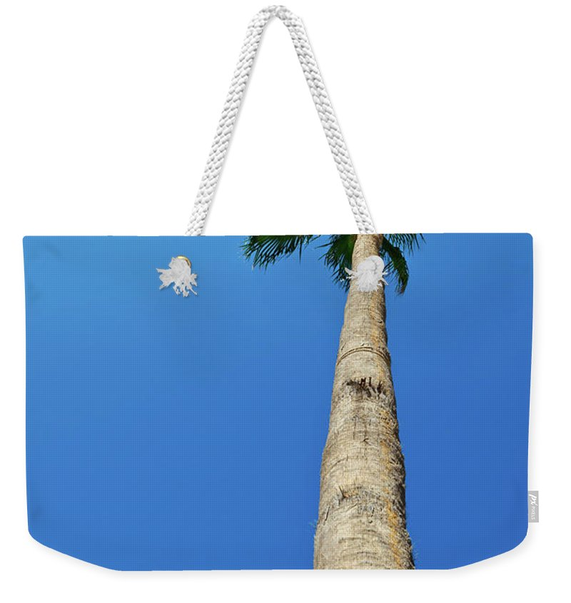 Abstract Weekender Tote Bag featuring the photograph Palm Tree Against Blue Sky by Lukasz Szczepanski