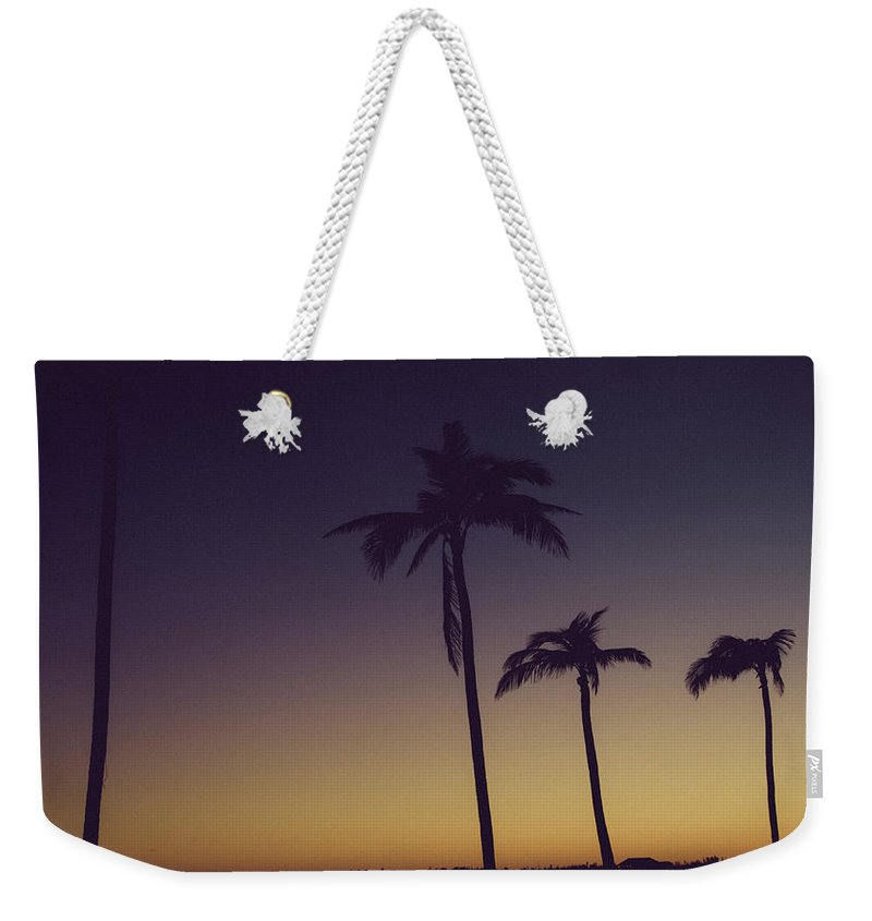Vacation Weekender Tote Bag featuring the photograph Palm Trees In The Morning Light by Anthony Doudt