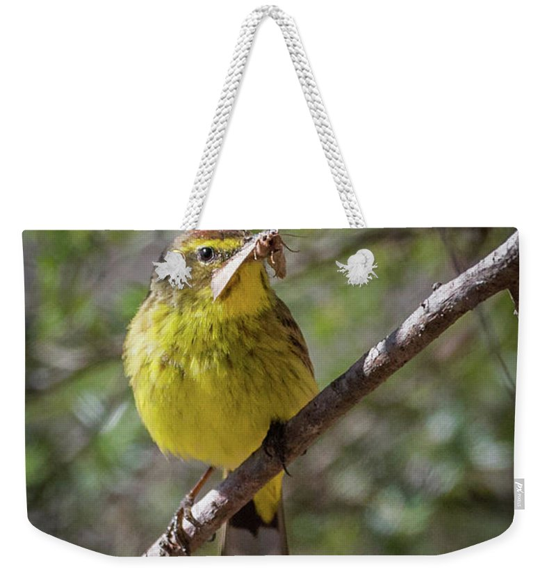 Palm Warbler Weekender Tote Bag featuring the photograph Palm Warbler by Bill Wakeley