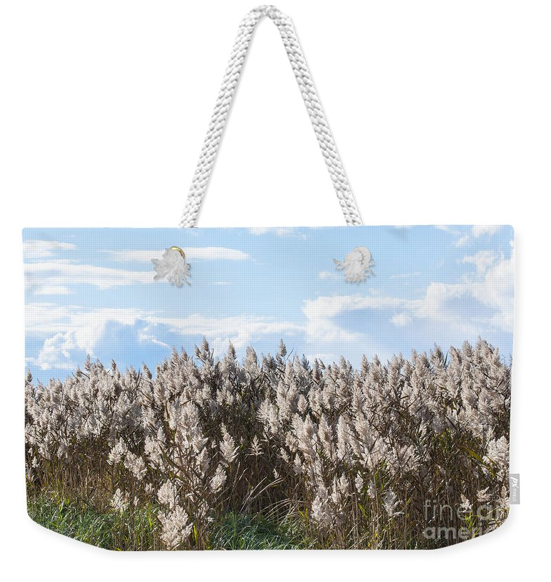 Natanson Weekender Tote Bag featuring the photograph Pampas Grass by Steven Natanson