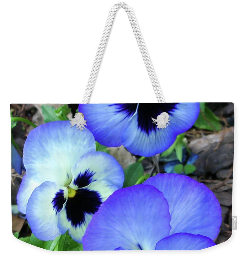 Flowers Weekender Tote Bag featuring the photograph Pansies 0823 by Guy Whiteley