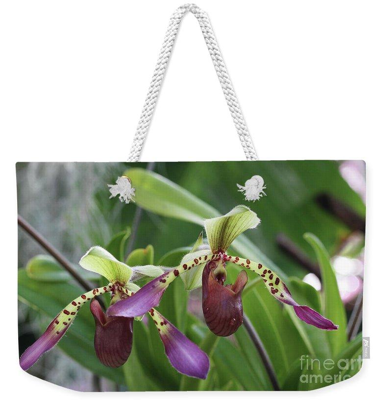 Paphiopedilum Lowii Princehouse X Sib Weekender Tote Bag For Sale By
