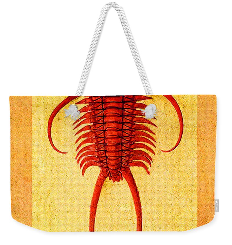 Trilobite Weekender Tote Bag featuring the photograph Paraceraurus Fossil Trilobite by Melissa A Benson