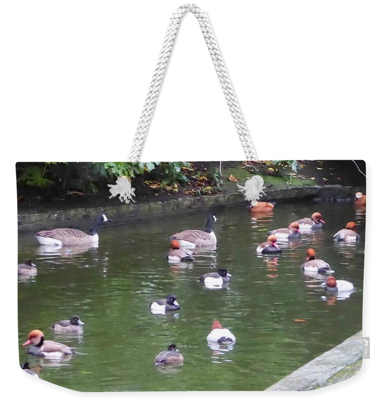 Waterfowl Weekender Tote Bag featuring the photograph Park Waterfowl by Margaret Brooks