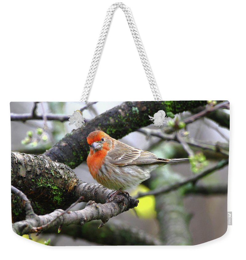 House Finch Weekender Tote Bag featuring the photograph Partial-migrator House Finch by Herbert L Fields Jr