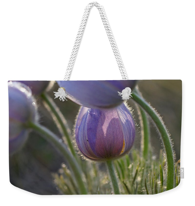 Pasque Weekender Tote Bag featuring the photograph Pasque Shadows by Heather Coen