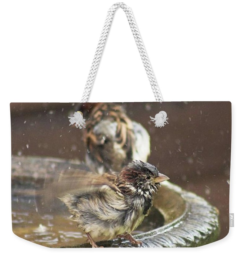 Nature Weekender Tote Bag featuring the photograph Pass The Towel Please: A House Sparrow by John Edwards