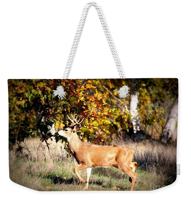 Animal Weekender Tote Bag featuring the photograph Passing Buck In Autumn Field by Carol Groenen