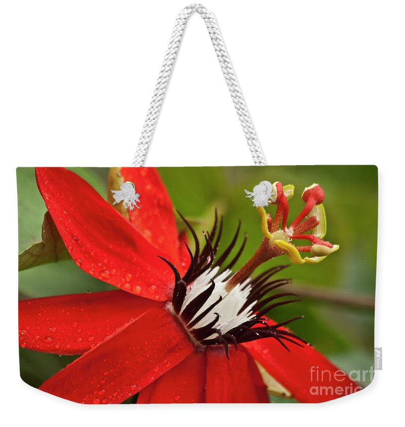 Nature Weekender Tote Bag featuring the photograph Passionate Flower by Heiko Koehrer-Wagner