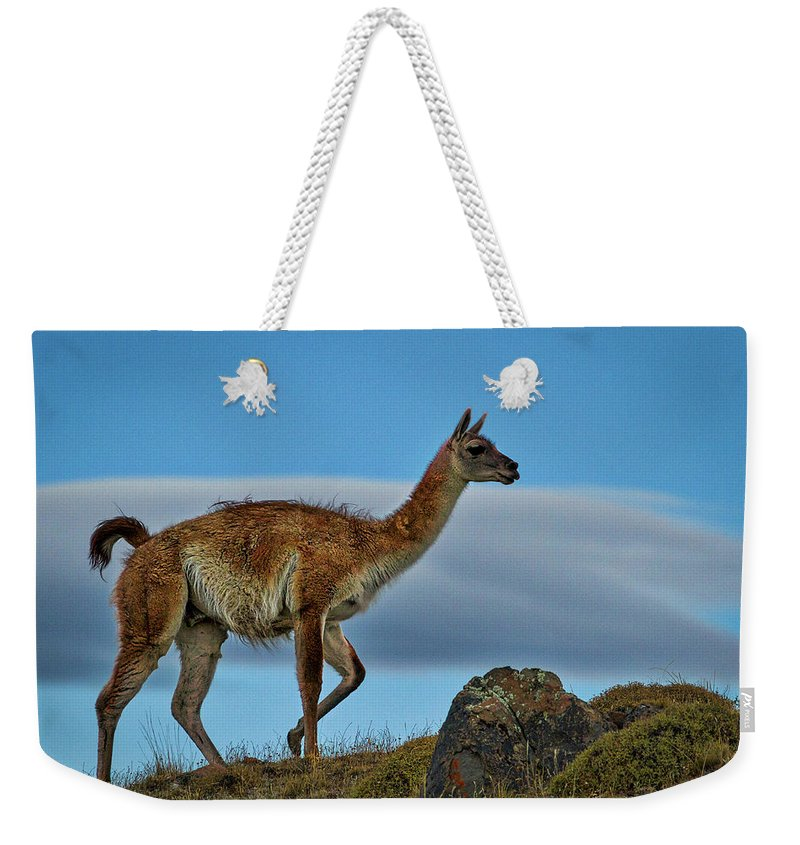 Guanaco Weekender Tote Bag featuring the photograph Patagonian Guanaco - Chile by Stuart Litoff